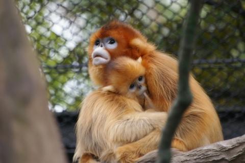 Yokohama Zoo 'Zoorasia'