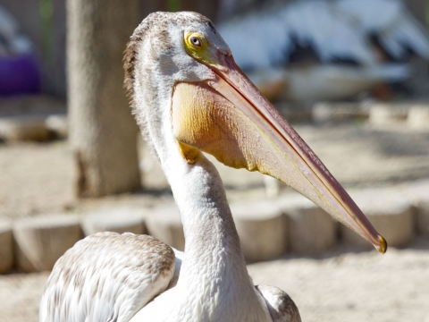 Suncoast Seabird Sanctuary