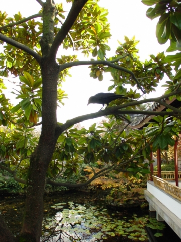 Dr. Sun Yat Sen Chinese Garden