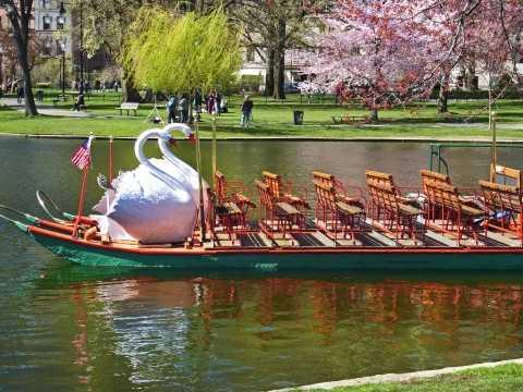 Swan Boats of Boston
