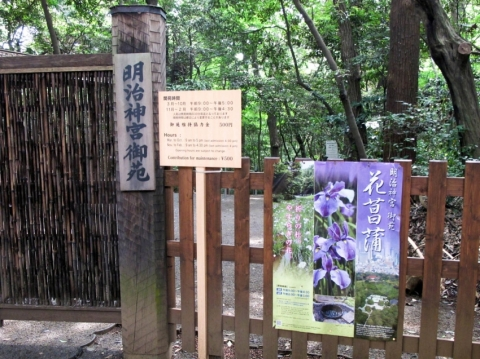 Iris Viewing at Meiji Jingu Shrine