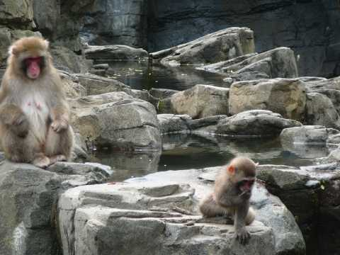 Tisch Children's Zoo