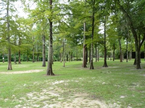 Bogue Falaya Park