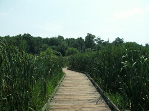 Huntley Meadows Nature Center